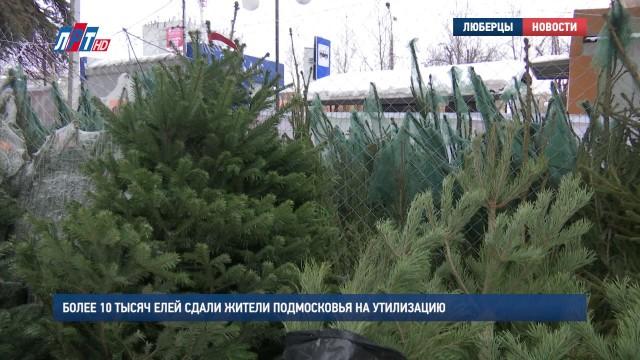 Более 10 тысяч елей сдали жители Подмосковья на утилизацию