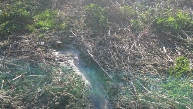 Минэкологии в Раменском районе предотвратило загрязнение реки