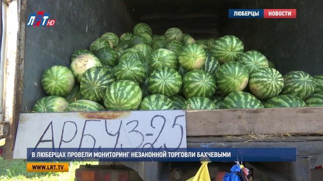 В Люберцах провели мониторинг незаконной торговли бахчевыми